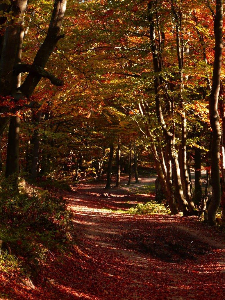 Jesień w Beskidzie Sądeckim - bukowina w okolicach Runku