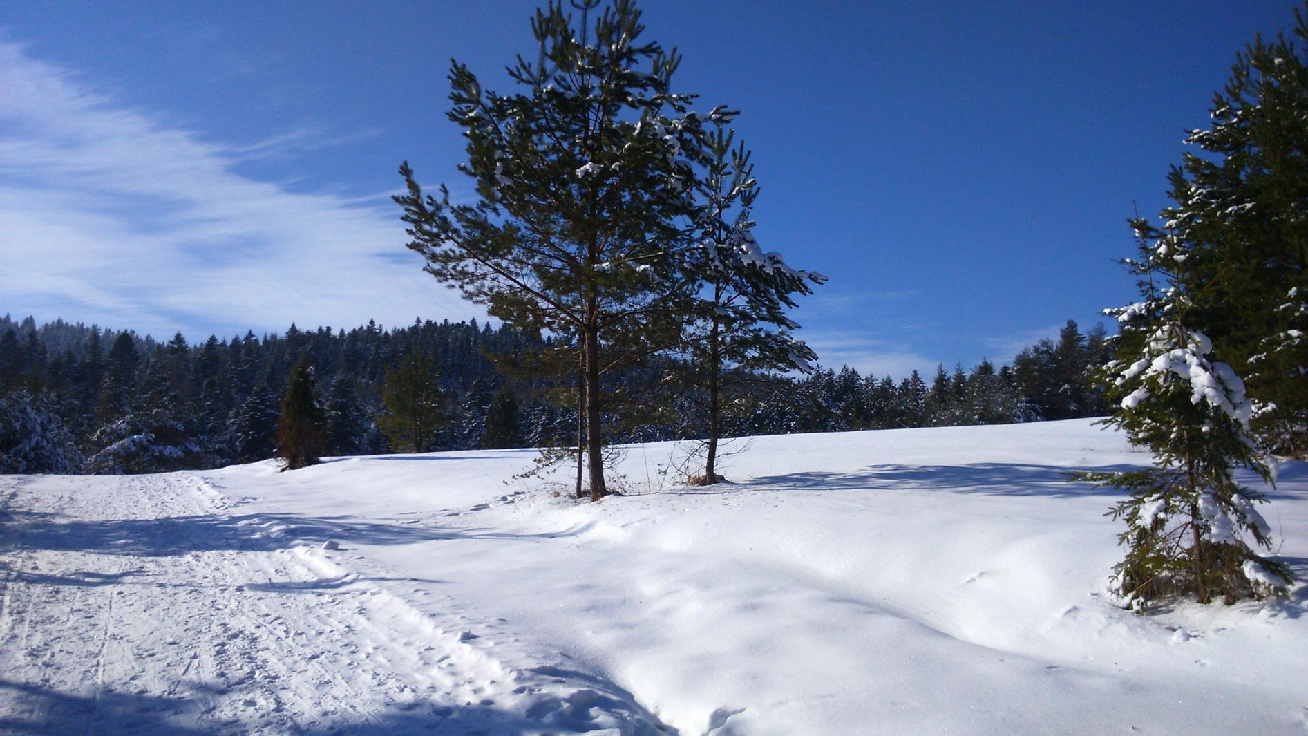 W pobliżu Tylicza trasa prowadzi malowniczymi łąkami
