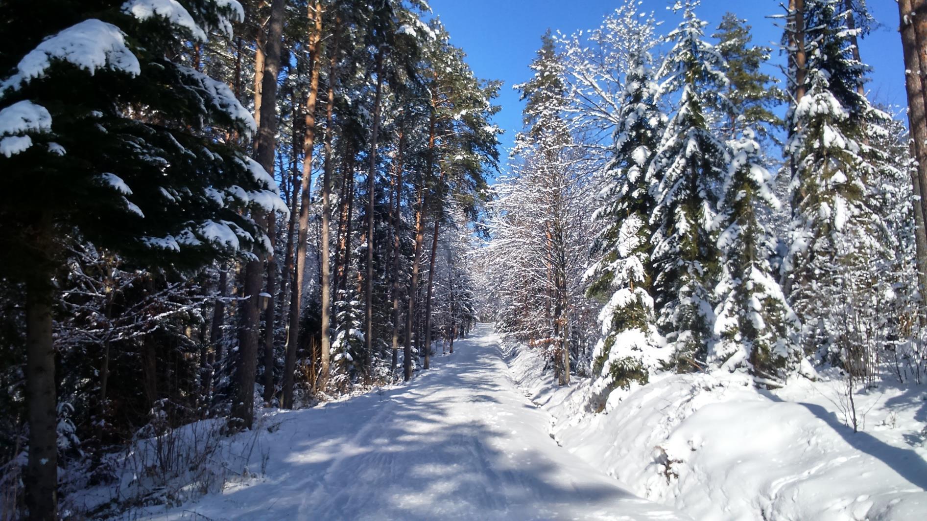 Odcinek leśny w rejonie Przełęczy pod Bradowcem