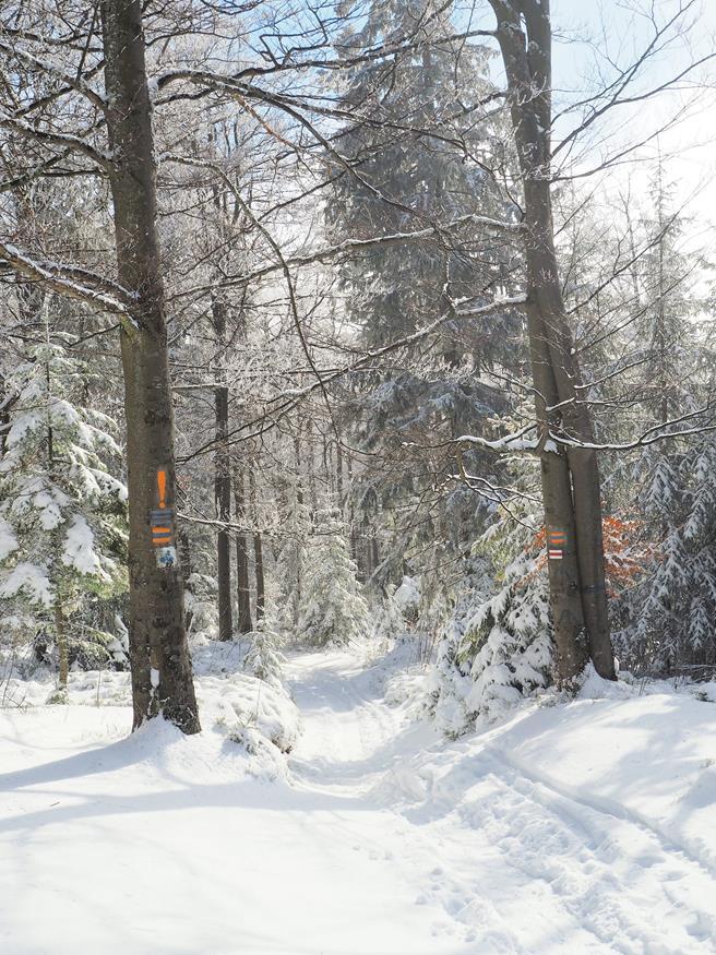 Bajkowa sceneria w okolicy Czubakowskiej.