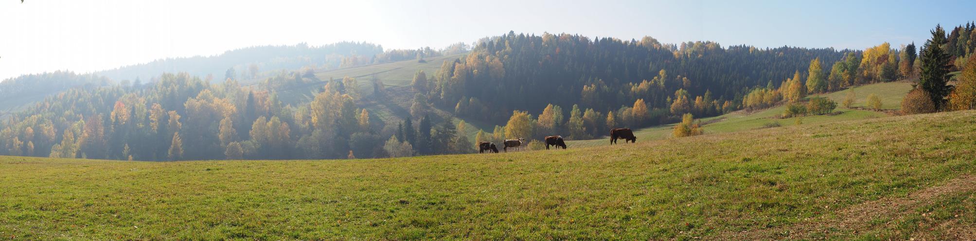 Łąki wokół Szczawnika.