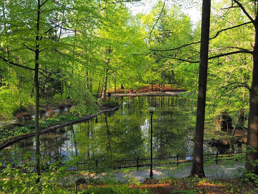 Od wiosny do jesieni w stawie można spotkać łabędzie, kaczki i gęsi egipskie