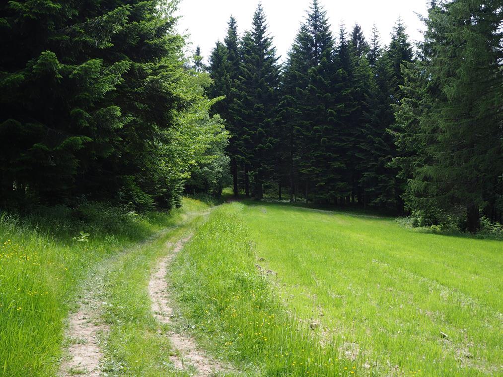 Ok. 300 m. za tą polaną od szlaku odchodzi droga w prawo, którą dotrzemy na łąkę - punkt widokowy na Beskid Niski