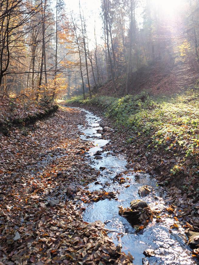 Strumień przepływający przez rezerwat 'Obrożyska' - siedlisko borsuków i salamander.