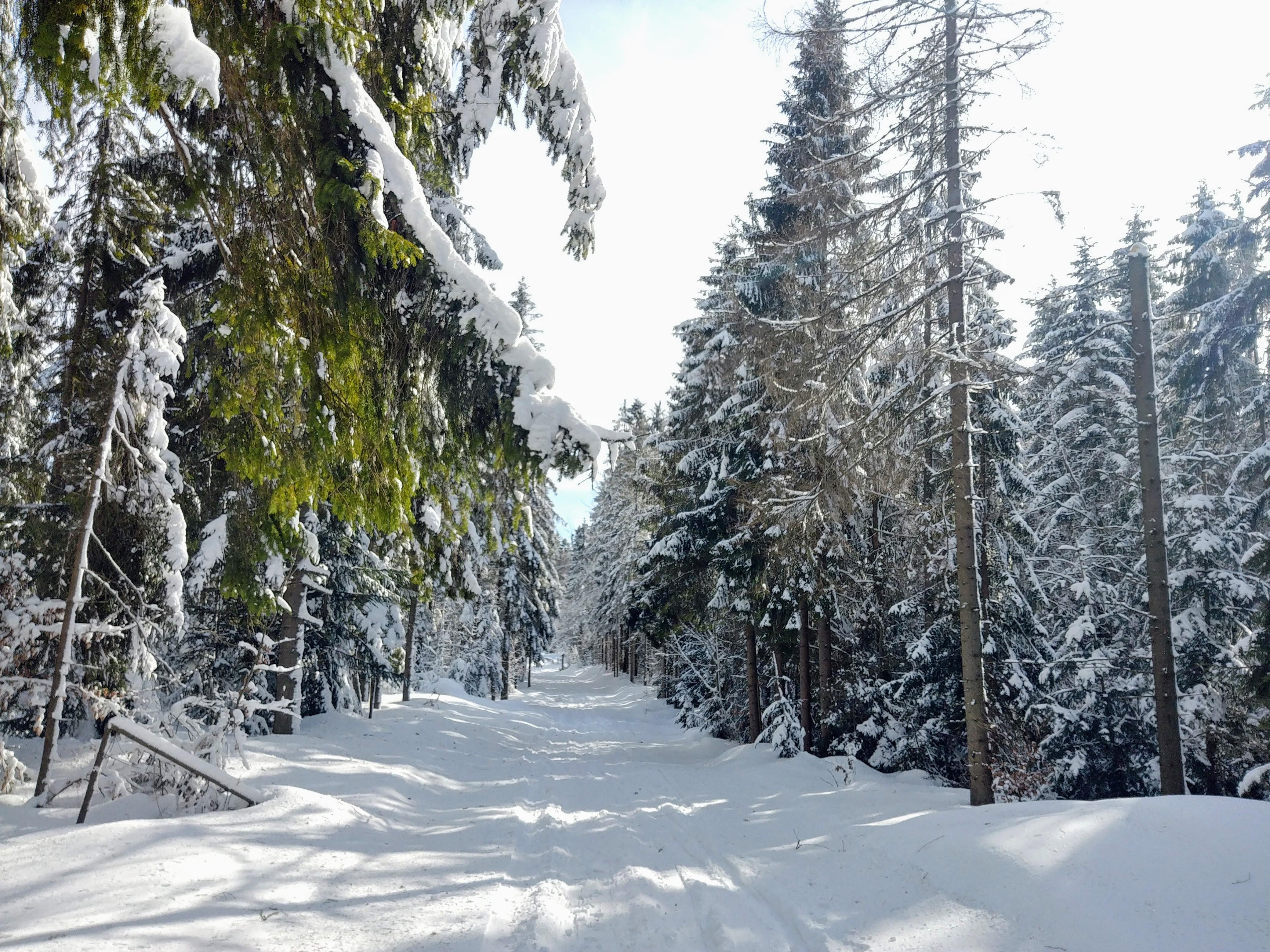 Początkowy odcinek narciarskiego szlaku na Eliaszówkę
