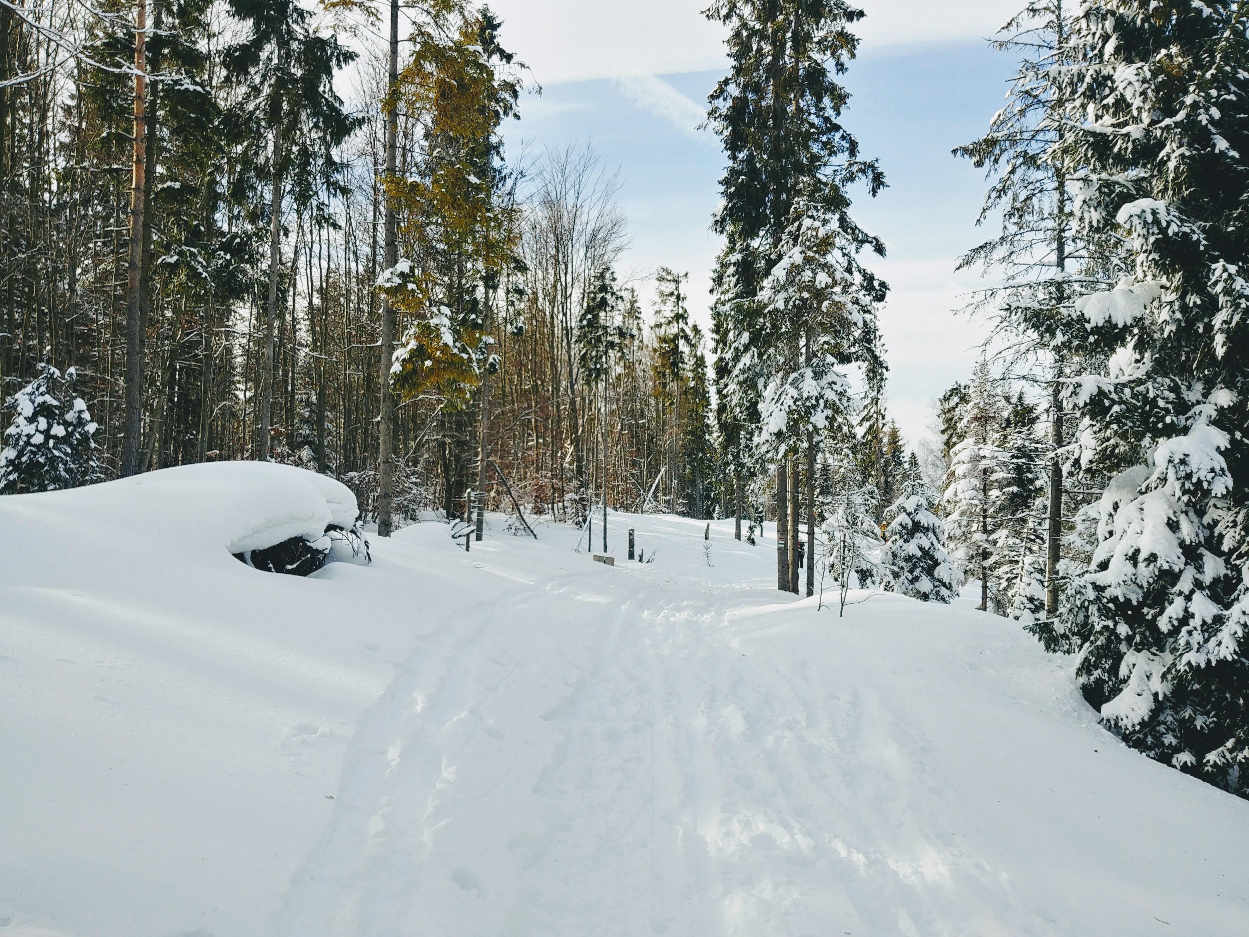 Szlak narciarski na Eliaszówkę