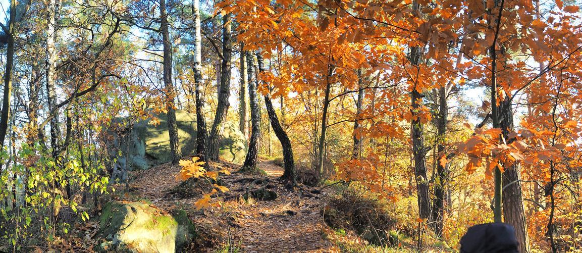 Las wokół 'Cyganki'.