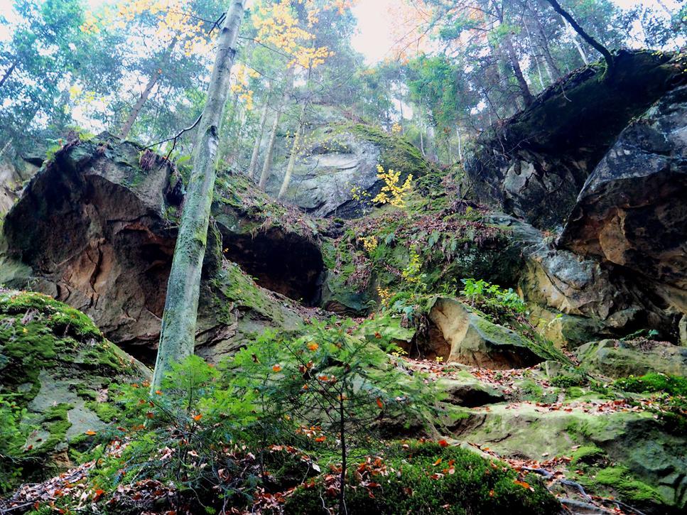 Ze ścian wąwozu zwieszają się drzewa, których korzenie powrastały w szczeliny skalne.